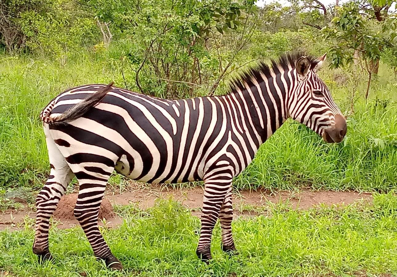 Devine African Safaris Limited